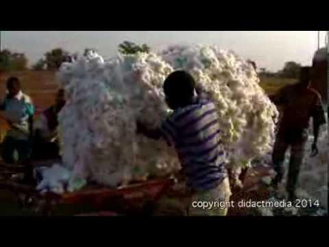Wo kommt unsere Kleidung her? - Globale Anbaugebiete von Baumwolle