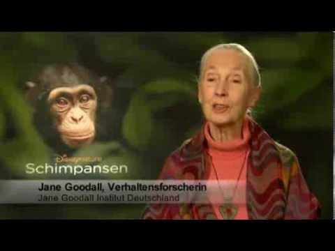Schimpansen - Menschenaffen im Regenwald Trailer MedienLB